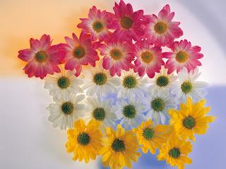 Beautiful Flowers Colors wallpaper