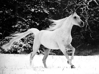 Snow White Horse wallpaper