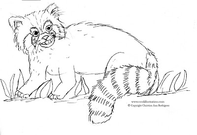 Crod artblog color me red panda for Red panda coloring page
