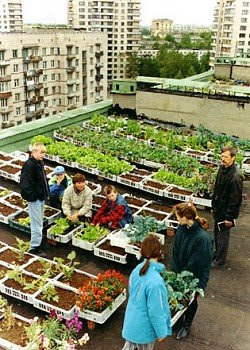 Landscape urbanism from the rooftop varietals for What is terrace farming definition