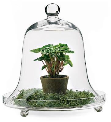 The Bell Glass Dome Cloche Poppytalk