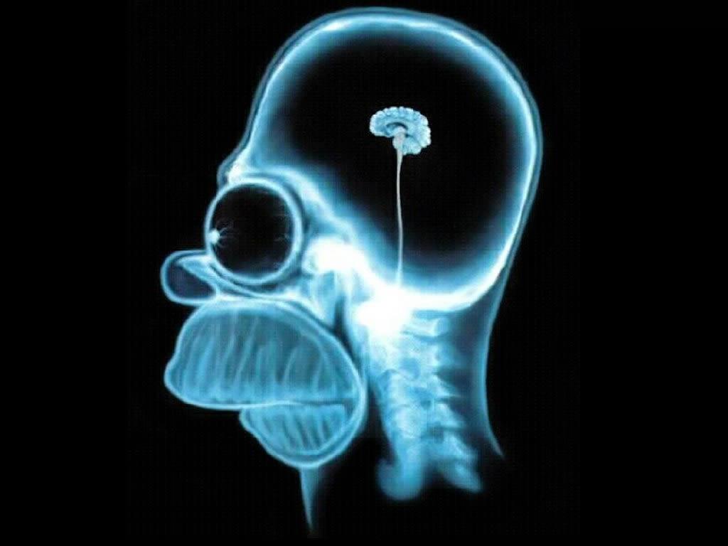 A Teoria da Terra Oca Homer-simpson-wallpaper-brain-1024