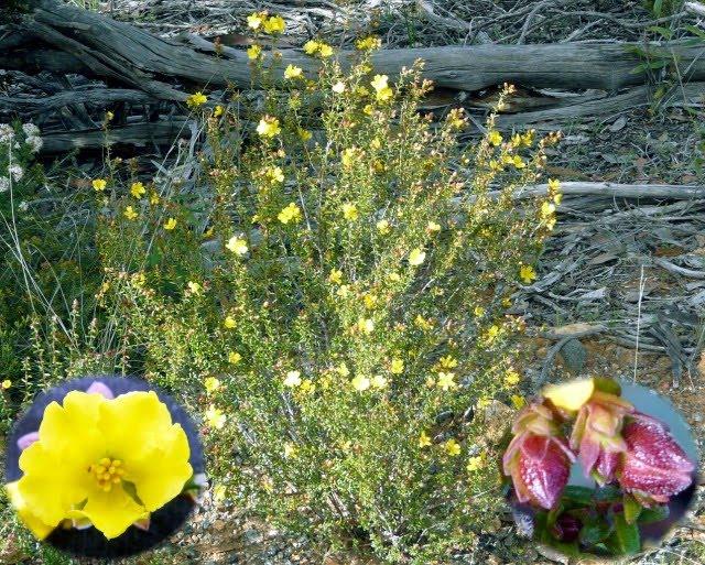 nature of  u0026 39  u0026 39 my backyard u0026 39  u0026 39   2010