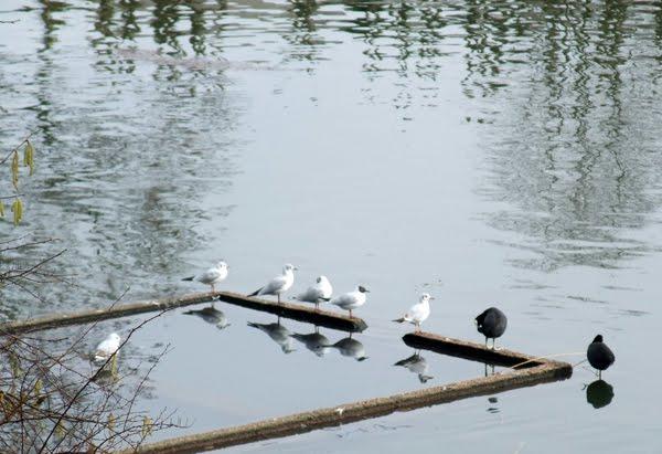 [a_oiseaux_DSCF3519.jpg]