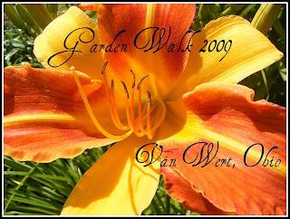 Orange lily from the Baumle garden