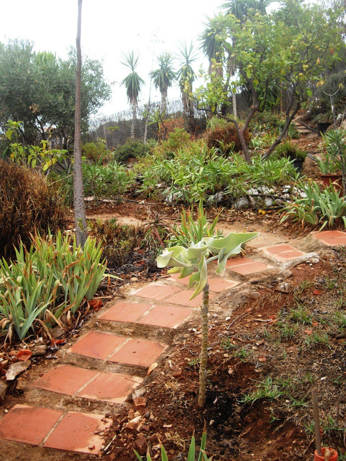 Un jardin bajo los pinos el paseo for Capillas de velacion jardin de los pinos
