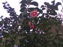 Bel me regala estas bellas rosas...Gracias.