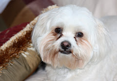 My Beloved Dog Tommy Boy
