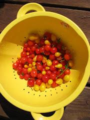 Tiny tomatoes!