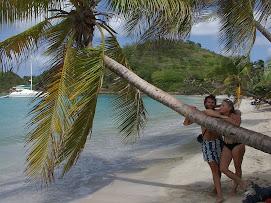 Le palmier photo...