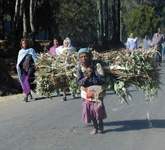 Women and children spend a significant portion of each day collecting firewood