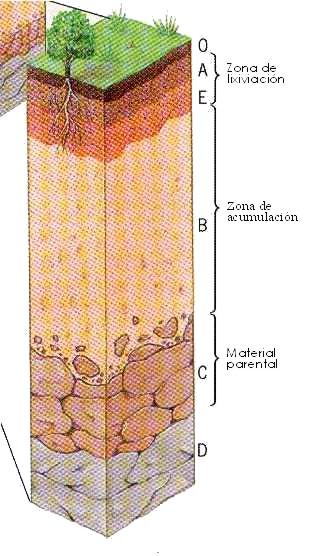 Yurley hidalgo el suelos for Como se forma y desarrolla el suelo