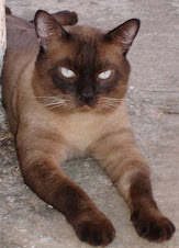 Mustapha, O Príncipe