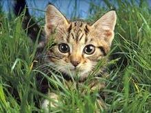 Lushheart~Medicine Cat