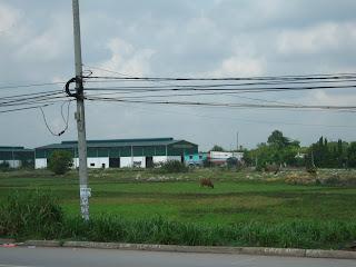 Saigon suburbs