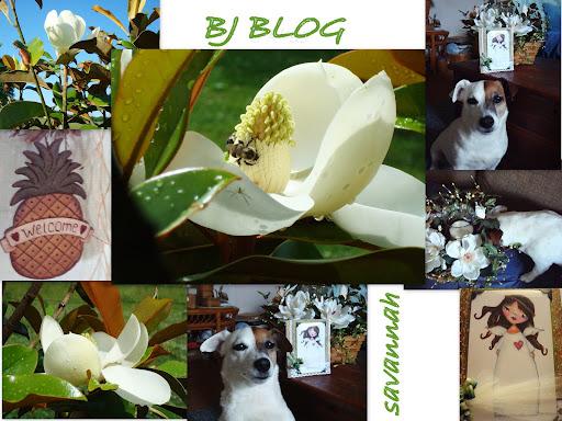 BJ's  Blog