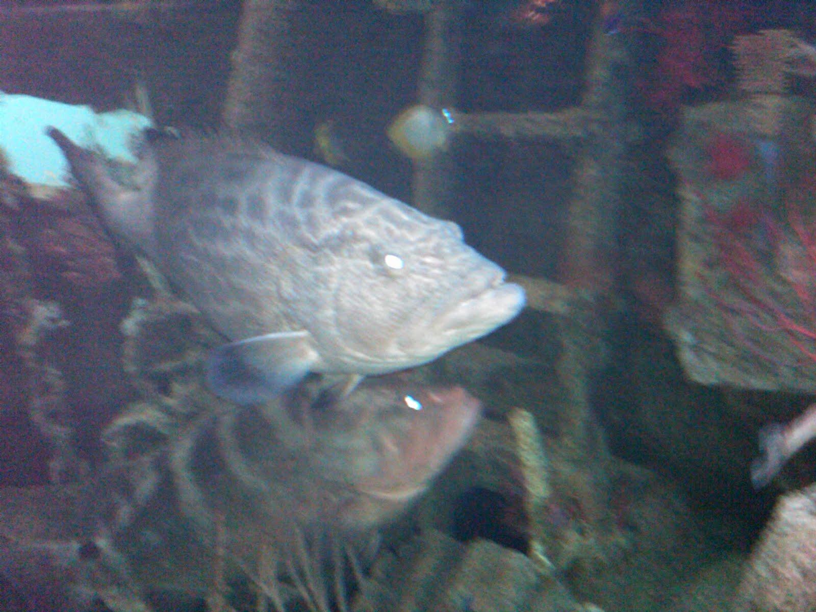 Ugly freshwater aquarium fish - Ugly Fish