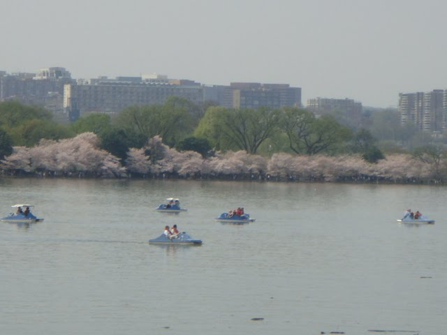cherry blossom festival washington dc 2010 photo by oystergirl
