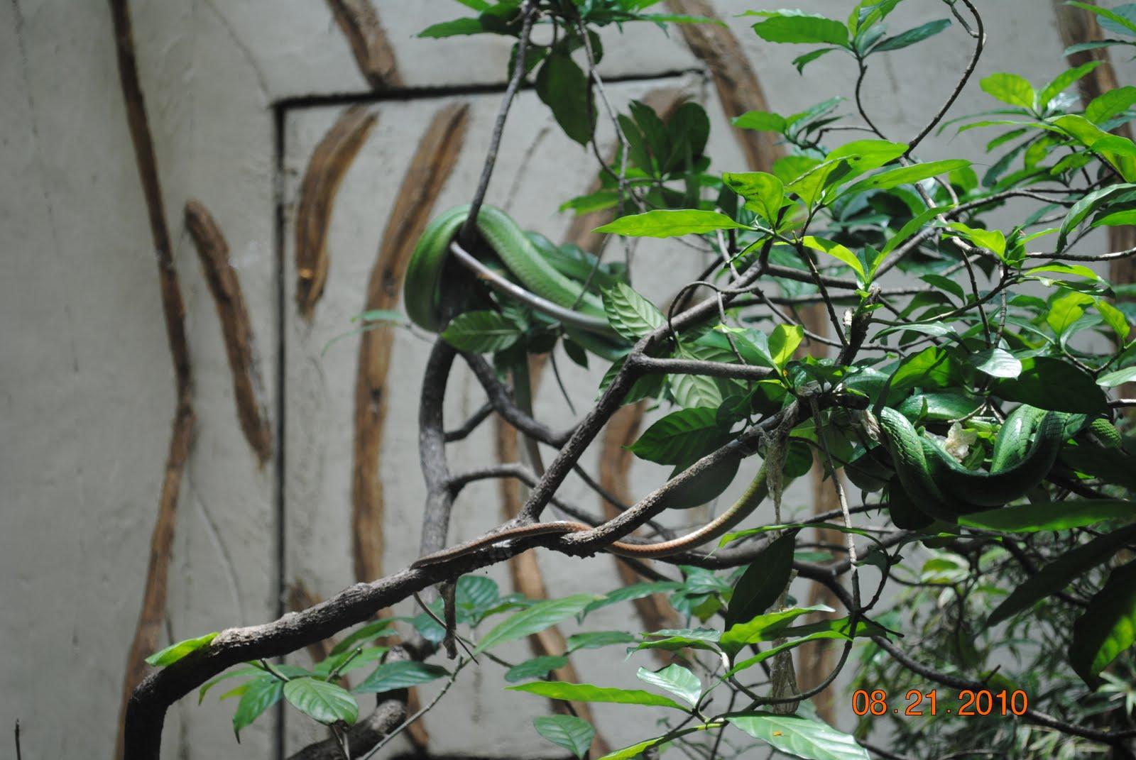 Ito Ang Mga Larawan Iba Pang Hayop Isang Banda Zoo
