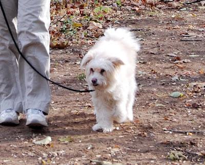 Freddie the dog