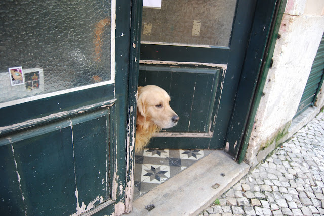 dog in Lisboa