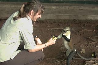 Monkey Sanctuary, Volta Region