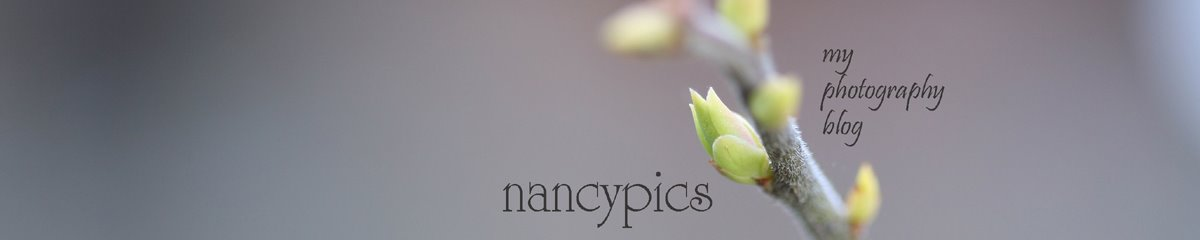 Nancypics - my photography blog
