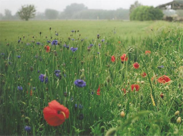 Le soluzioni alternative maggio 2010 for Soluzioni alternative al giardino