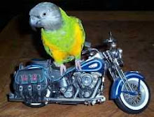 Biker Birds