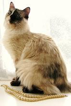 Susan Boyle's cat Pebbles