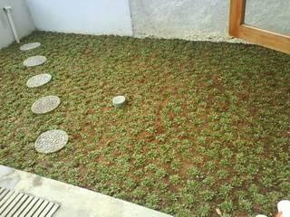 taman rumah : halaman