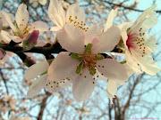 Espero la Primavera