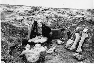 Expedition Members Lifting Titanotherium