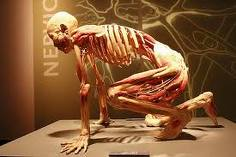 http://2.bp.blogspot.com/_Z3_sm3n2Tz8/TUwPKbfYm0I/AAAAAAAAAJE/GQIqcsZiDNc/s1600/bodies-exhibit-Nyc.jpg