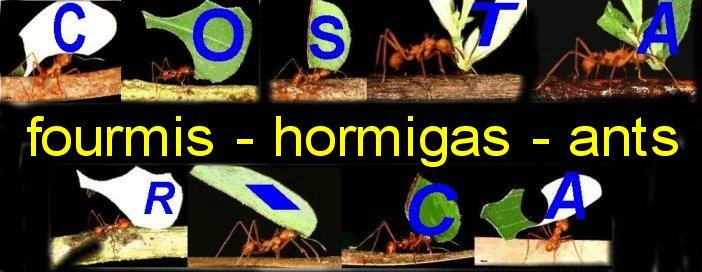 fourmis du Costa Rica