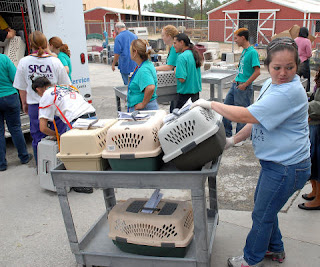 Employee Marleny Alvarado transports a cart full of animals from Galveston into the Houston SPCA