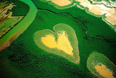 Heart shape in verdant wetlands