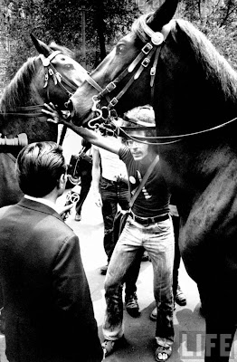 Gay activist stepping around police horses 1971