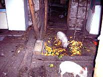 дом с домашним хозяйством в Тольятти, продам.ФОТО