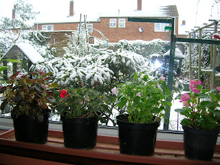 summer flowers on a winters day