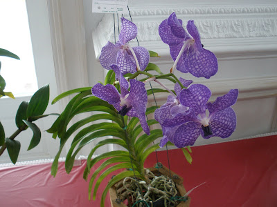 Love is in the Air - Garden Club of Grand Cayman Flower Show - image 4