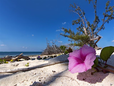 Why you should get married on a Cayman Beach, favourite Cayman Wedding spots - image 8