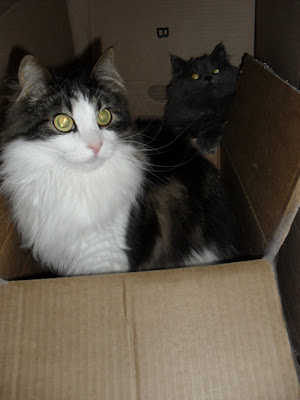 Nakenbilder av sam och katt consider, that