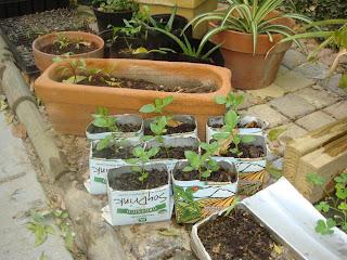 Gratitud ambiental peque o vivero en casa for Vivero casa jardin