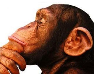 Foto de rosto, macaco segurando queixo, macaco pensando.