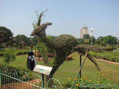 peacock shaped from hedges at hanging gardens