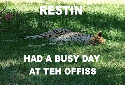 Kitteh restin