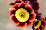 Flower Photos Edited