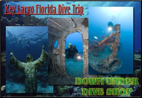 down under dive shop down under dive shop 39 s travel and. Black Bedroom Furniture Sets. Home Design Ideas