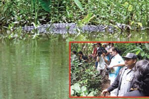 Wild Crocodiles surface in Khao Yai
